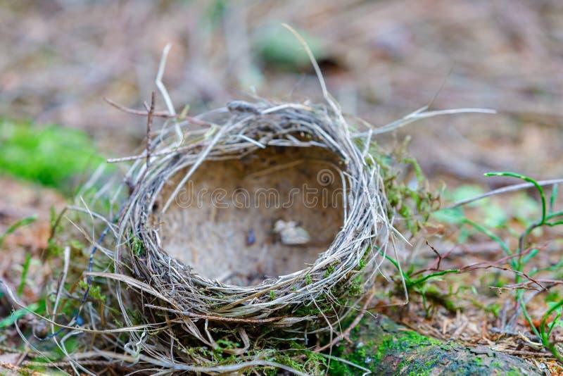 Het lege vogel` s verlaten nest ligt op de grond stock fotografie