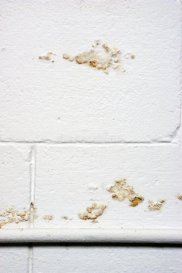 Het Lek van de Schade van de Lekkage van de Vochtigheid van het Water van de Muur van de kelderverdieping stock afbeeldingen