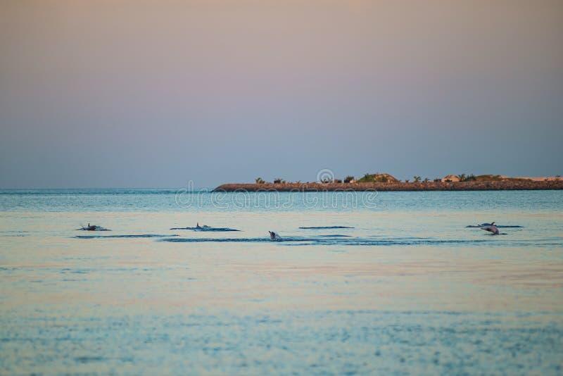 Het letten op dolfijnen bij zonsondergang of bij zonsopgang, dolfijnen in de Indische Oceaan stock foto