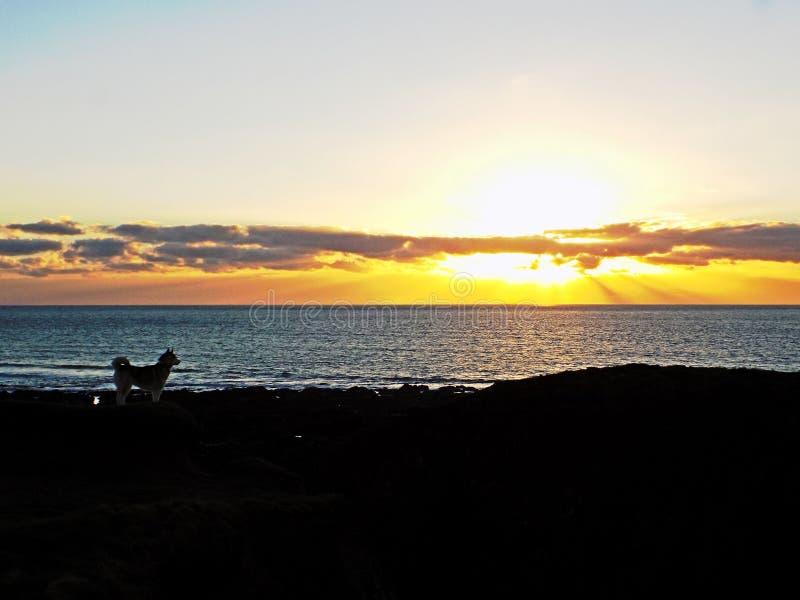 Het letten op van de hond zonsondergang royalty-vrije stock fotografie