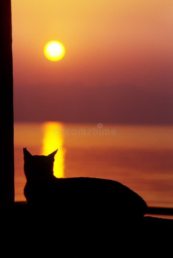 Het letten op van de kat de zon daalt royalty-vrije stock foto's