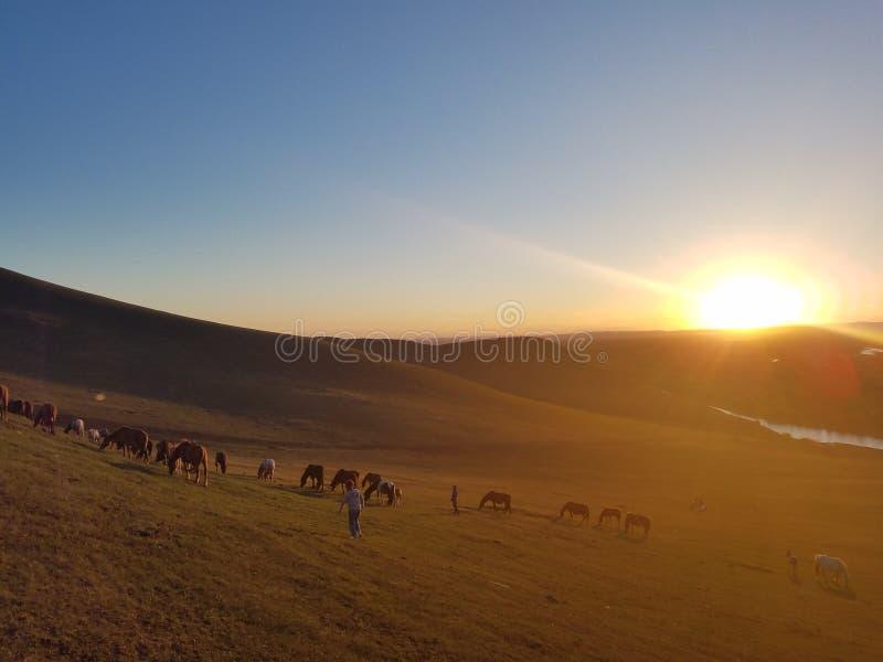Het letten op Zonsopgang in de weide van Hulun Buir stock foto