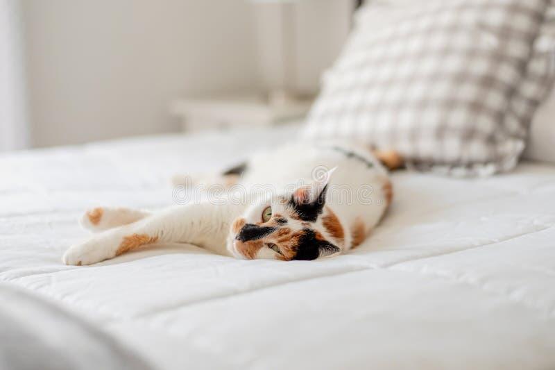 Het leuke calicokat ontspannen op wit bed stock foto's
