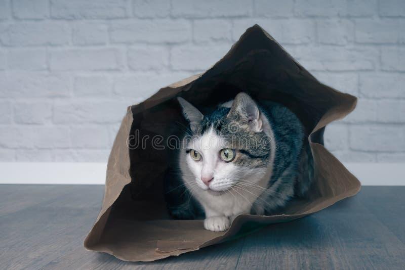 Het leuke gestreepte katkat verbergen in een het winkelen zak stock afbeelding