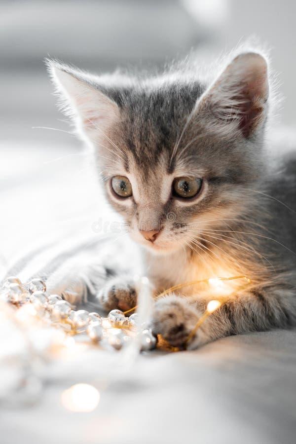 Het leuke grijze katje spelen met Kerstmisspeelgoed op een bokehachtergrond stock fotografie