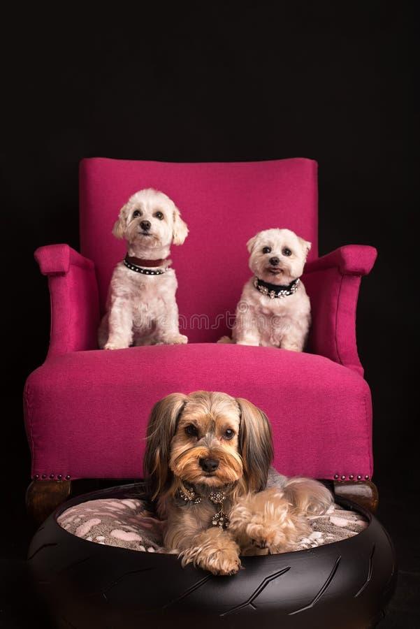 Het leuke honden ontspannen royalty-vrije stock afbeelding