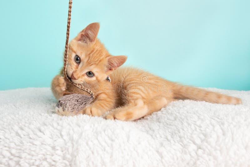 Het leuke Jonge Oranje Tabby Cat Kitten Rescue Wearing White Flower-Vlinderdas het Liggen Handtastelijk worden en het Spelen met  royalty-vrije stock foto's