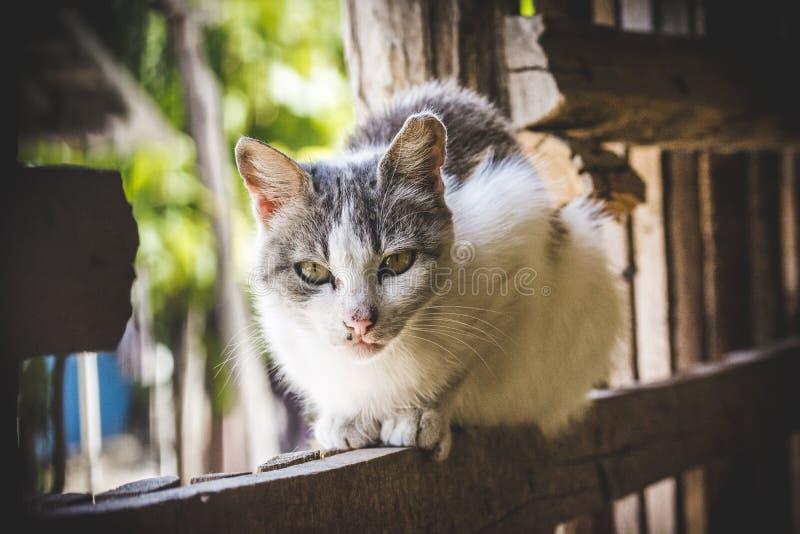 Het leuke kat ontspannen royalty-vrije stock foto's