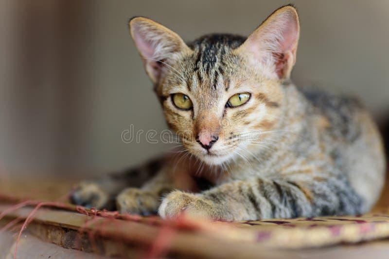Het leuke kat ontspannen op de mat stock fotografie