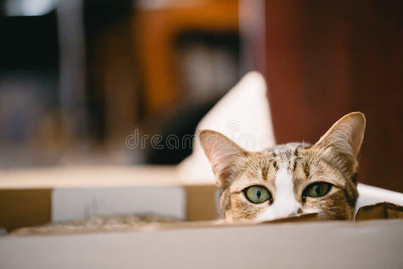Het leuke kat verbergen in de doos stock afbeeldingen