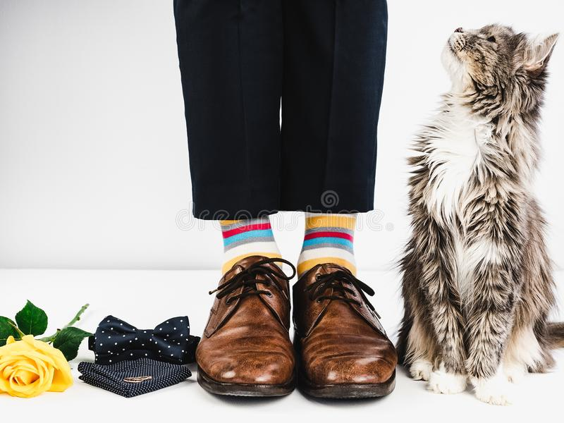Het leuke katje, nam en trouwringen toe stock fotografie