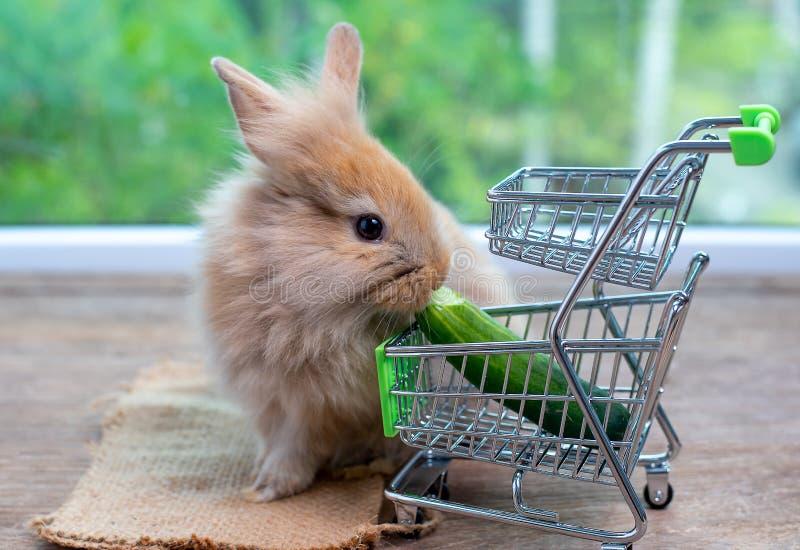 Het leuke lichtbruine konijn eet komkommer in boodschappenwagentje op houten lijst met groene achtergrond stock foto's