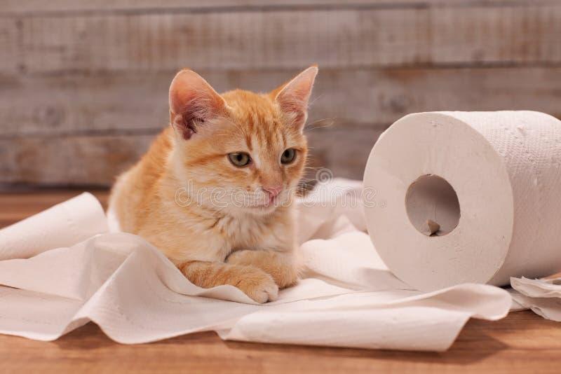 Het leuke oranje katje spelen met een toiletpapierbroodje die - op de overblijfselen liggen royalty-vrije stock fotografie