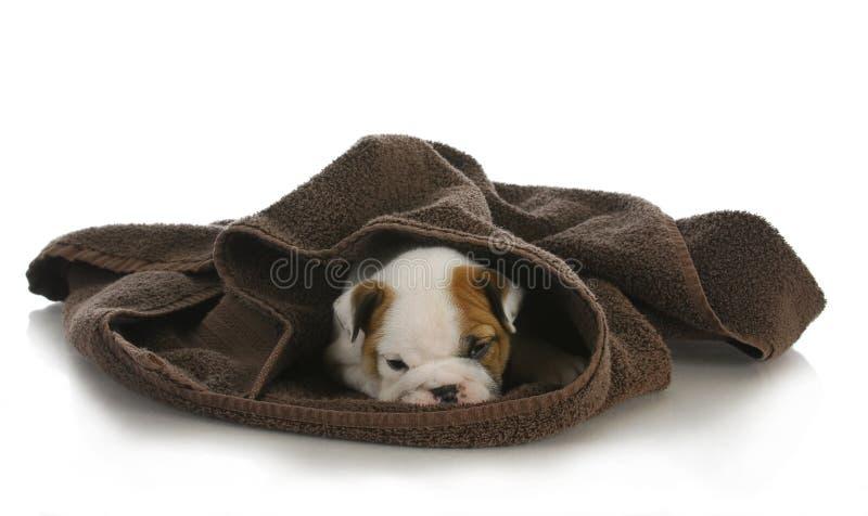 Het leuke puppy verbergen royalty-vrije stock fotografie