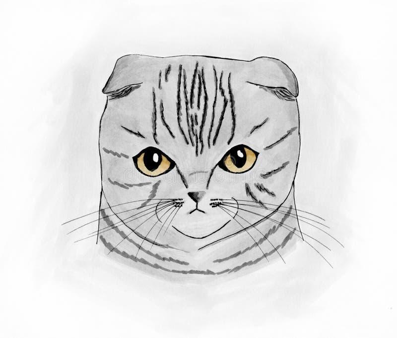 Het leuke Schotse portret van de vouwenkat stock foto's