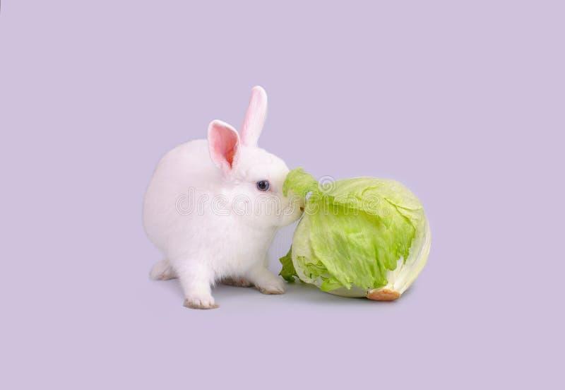 Het witte konijntje eet sla stock afbeeldingen
