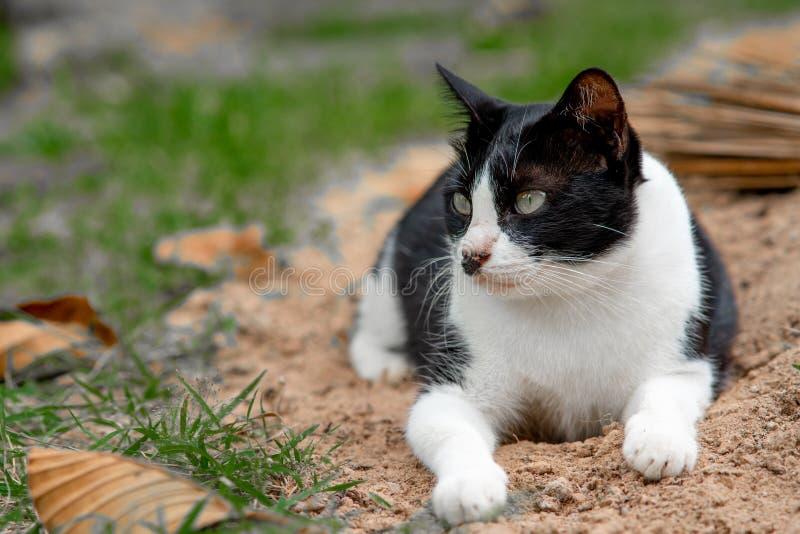 Het leuke zwart-witte katje ligt op de grond in het park royalty-vrije stock fotografie