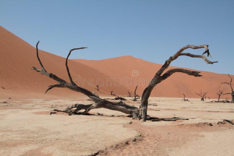 Het leven aan de grens in de woestijn van Namib stock foto's