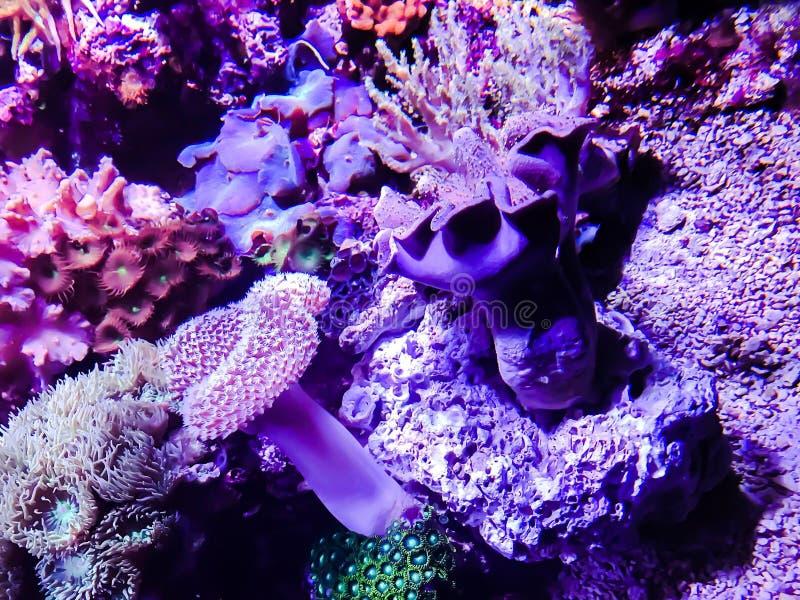 Het leven algen stock foto's