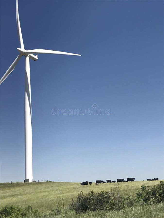 Het leven buiten Zuid-Dakota royalty-vrije stock fotografie