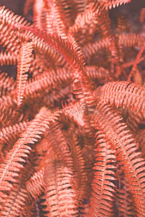 Het leven de bladeren van de Koraalvaren royalty-vrije stock afbeeldingen
