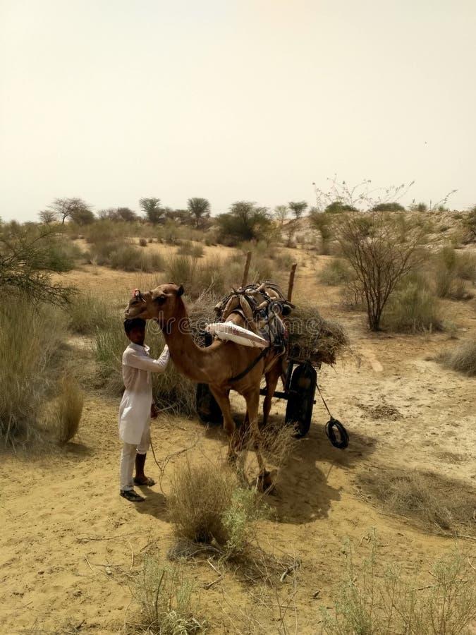 Het leven dierlijk India van het woestijndorp stock foto