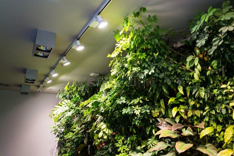 Het leven groene muur met bloemen en installaties, verticale tuin binnen royalty-vrije stock afbeeldingen