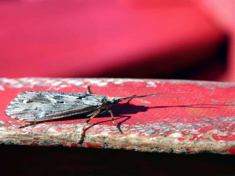 Het Leven III Van Het Insect Royalty-vrije Stock Foto