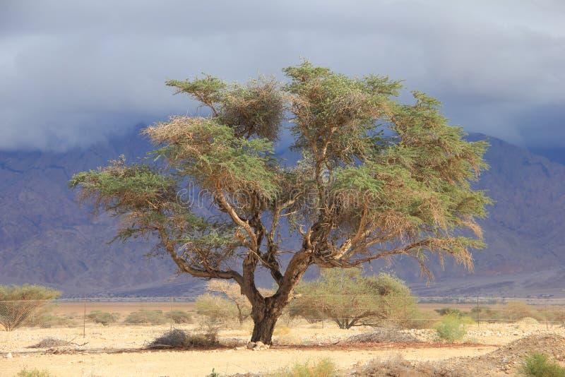 Het leven in Israëlische woestijn royalty-vrije stock afbeelding