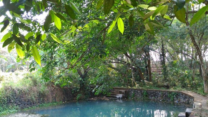 Het leven is koel door de pool royalty-vrije stock foto