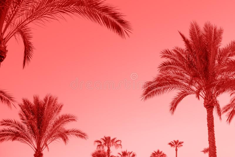 Het leven Koraalkleur van de Jaar 2019 gestemde Tropische palmen, s royalty-vrije stock fotografie