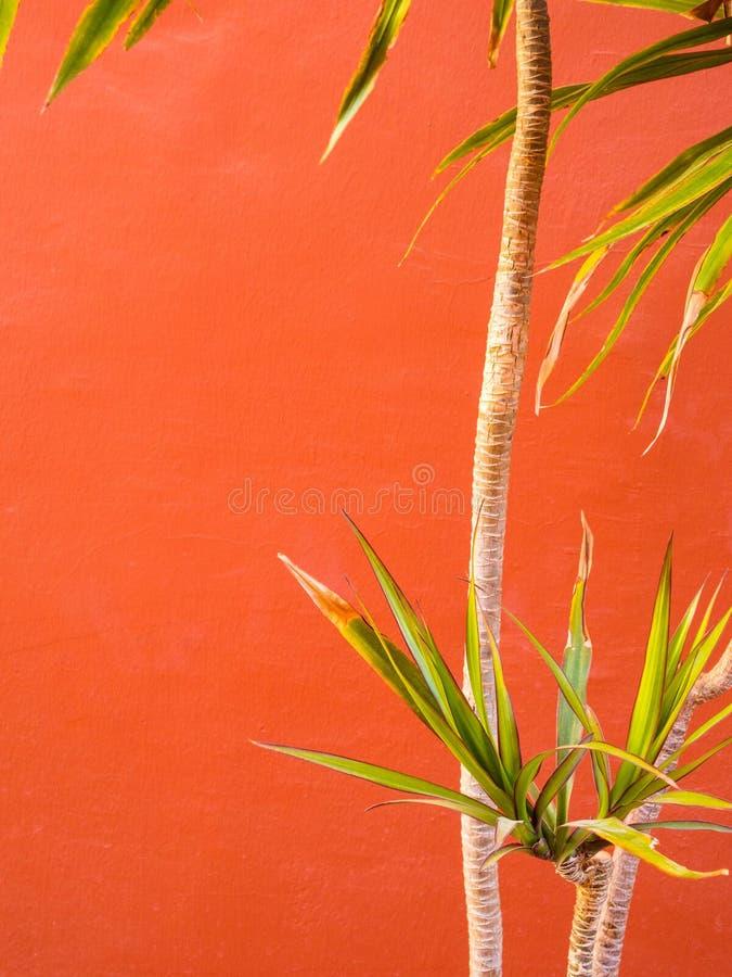 Het leven koraalkleur van het Jaar 2019 groene palm en in kleurenachtergrond stock fotografie