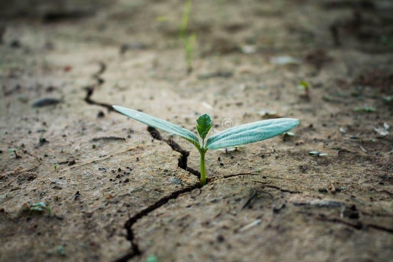 Het leven met boomdroogte stock fotografie