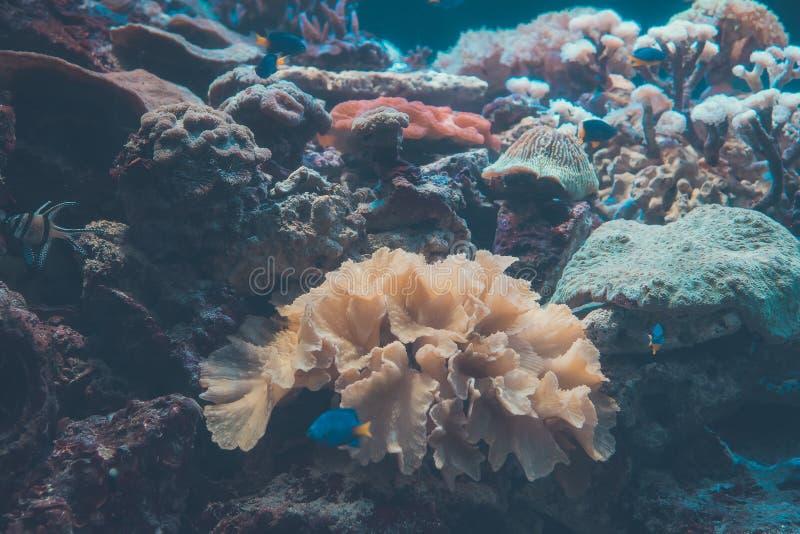 Het leven onder Overzees - tropische Wateren royalty-vrije stock foto's