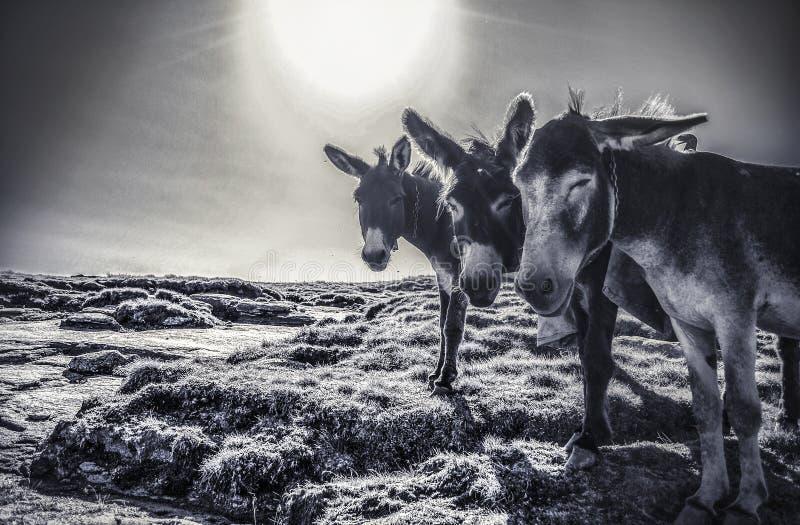 Het leven op de geheime planeet stock fotografie