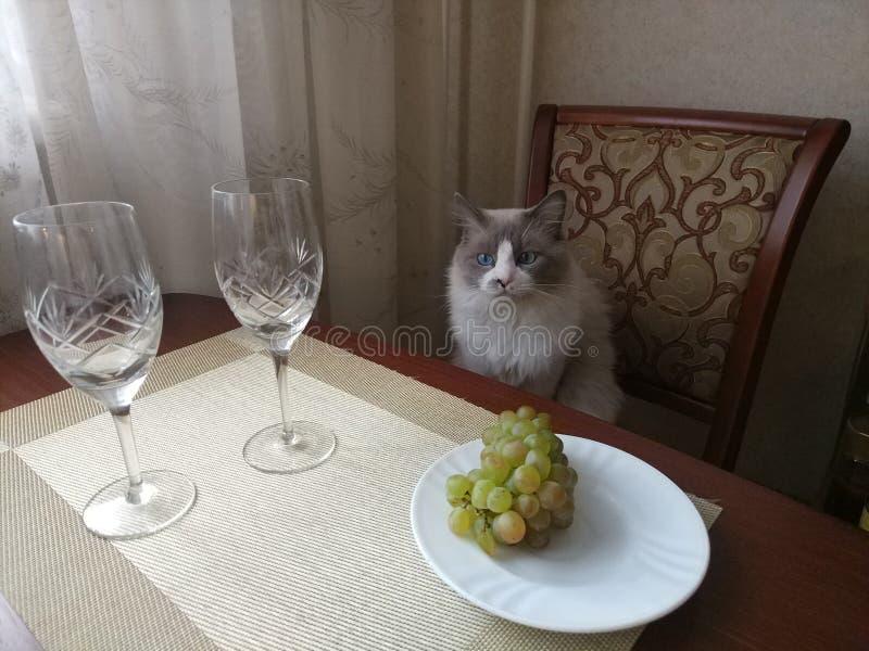 Het leven het schilderen met een kat stock foto