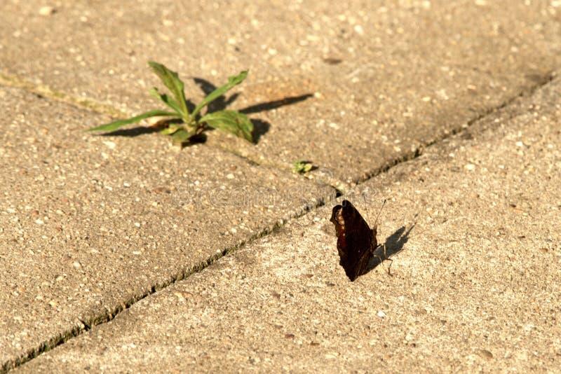 Het leven tart beton stock afbeelding