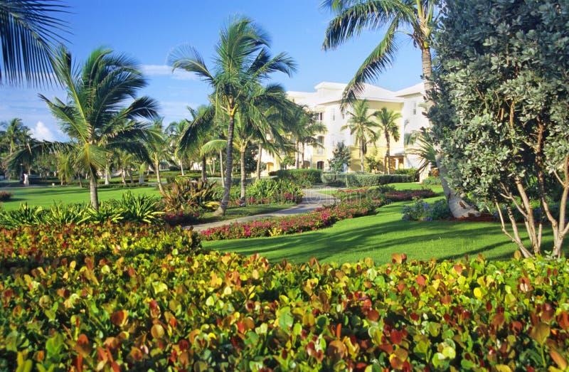Het leven in Tropisch Paradijs royalty-vrije stock afbeeldingen