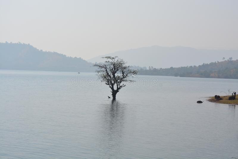 Het leven van een boom royalty-vrije stock afbeelding