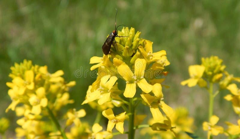 Het leven van een insect royalty-vrije stock foto