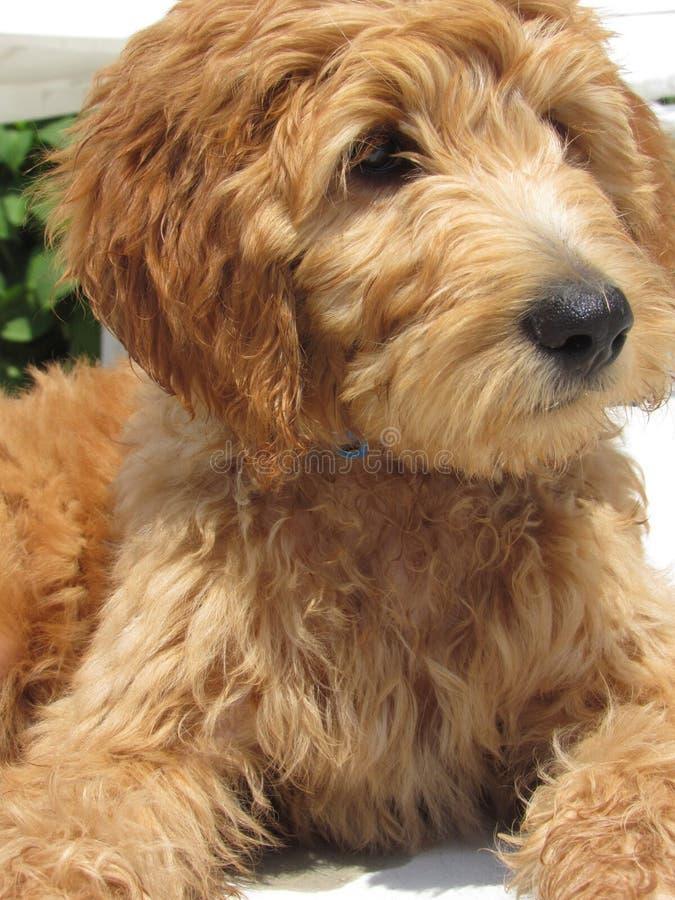 Het leven van een puppy stock foto