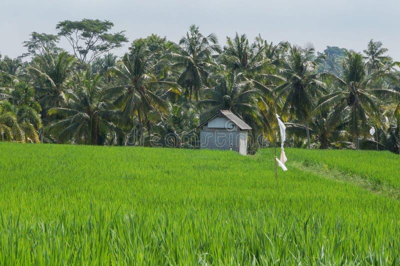 Het leven van Famer in Ubud Bali Indonesië royalty-vrije stock afbeelding