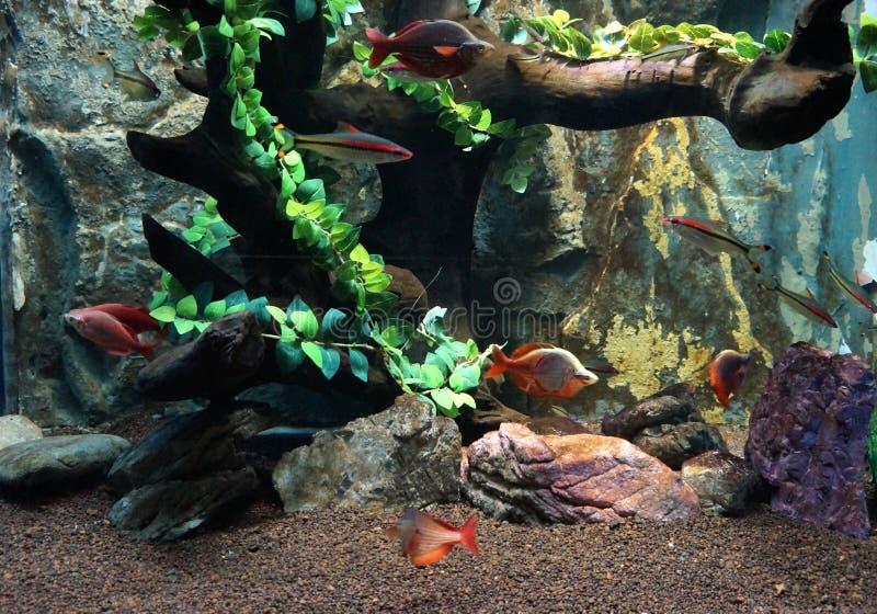 Het leven van het aquarium royalty-vrije stock foto's