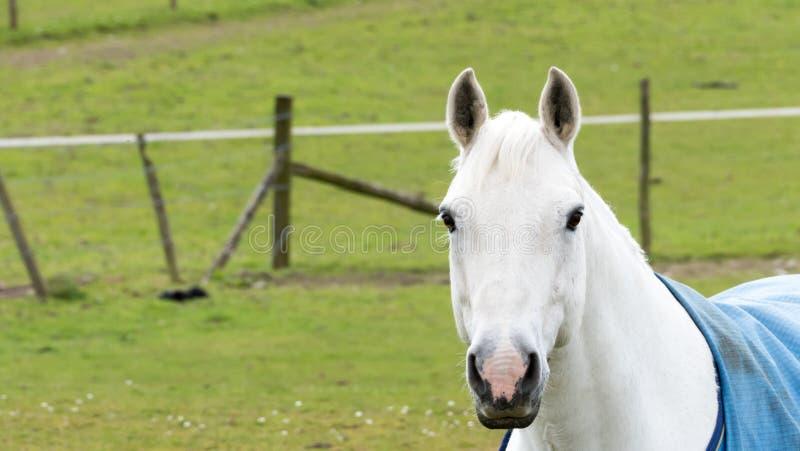 Het leven van het land - Paardportret royalty-vrije stock afbeelding