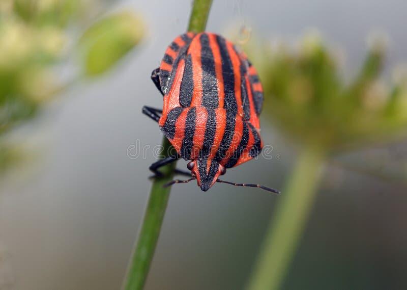 Het leven van insecten stock afbeelding
