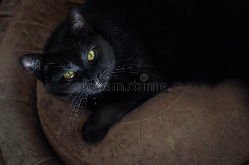 Het leven van katten en mensen in de moderne wereld royalty-vrije stock fotografie