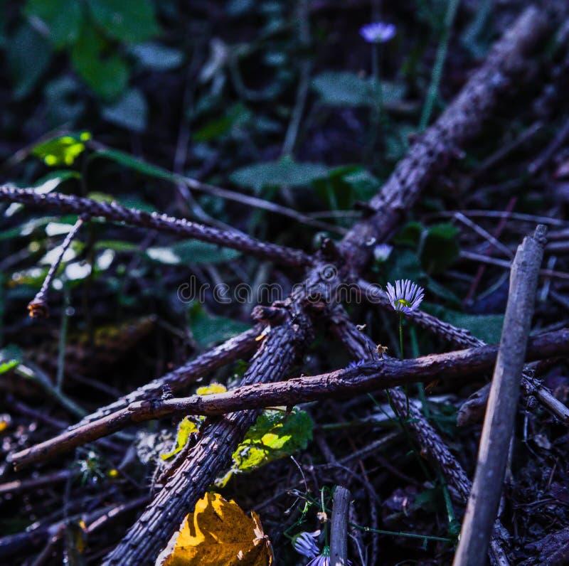 Het leven van kreupelhout stock afbeeldingen