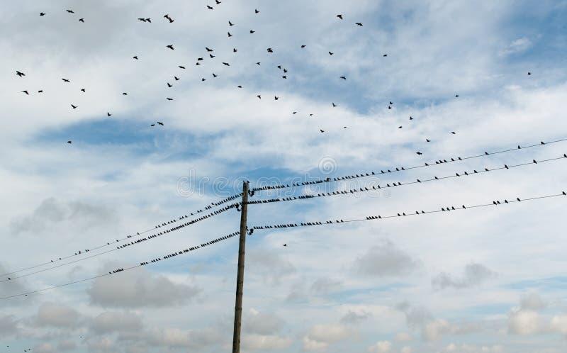 Het leven van wilde vogels stock afbeelding