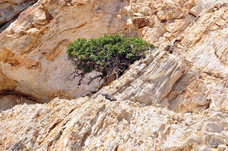 Het leven in woestijn stock afbeeldingen