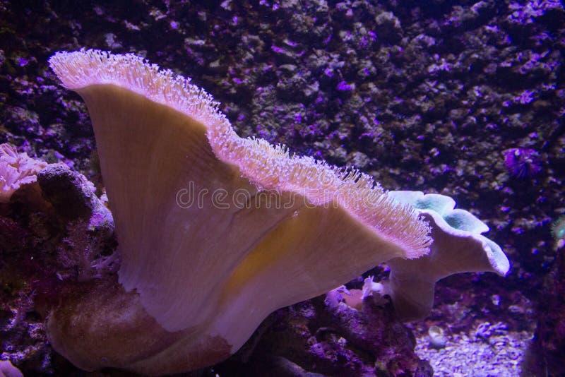 Het levendige kleurrijke aquatische leven in donker vertoningsaquarium royalty-vrije stock fotografie